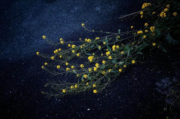 土屋じゅり 花写真