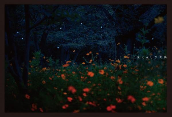 土屋じゅり 写真展 土屋樹里 真夜中の散歩